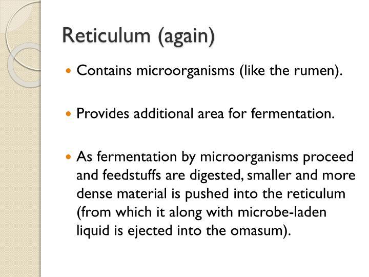 Reticulum (again)
