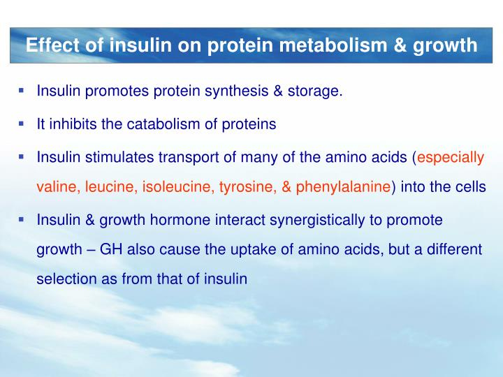 Insulin promotes protein synthesis & storage.