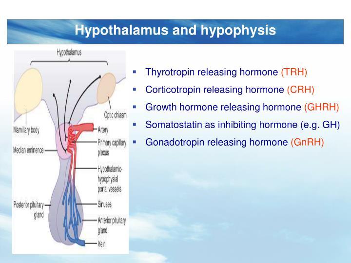 Hypothalamus and hypophysis