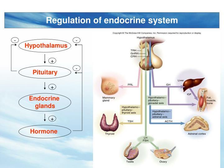 Regulation of endocrine system