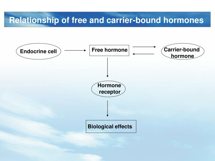 Relationship of free and carrier-bound hormones