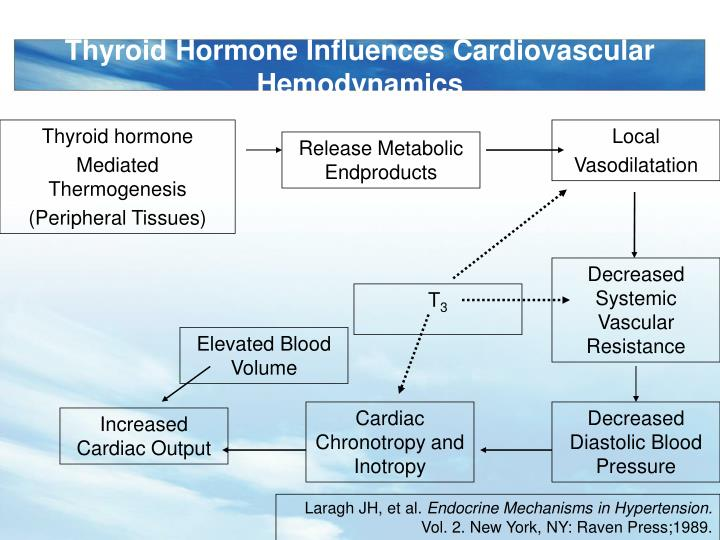 Thyroid Hormone Influences Cardiovascular Hemodynamics