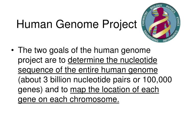 human genome project essays It is nothing short of a revolution against the way science has traditionally progressed1 this statement of thomas lee refers to a massive scientific undertaking known as the human genome project, an endeavor that aims to discover each and every intricacy of human genetics [tags: genome science biology essays.