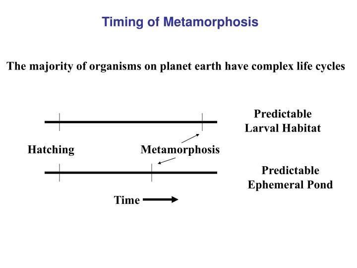 Timing of Metamorphosis