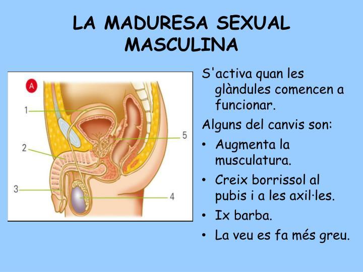 LA MADURESA SEXUAL MASCULINA