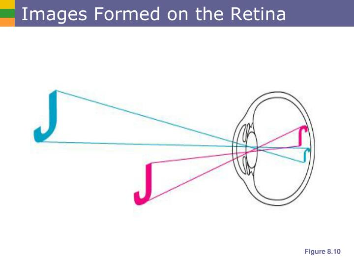 Images Formed on the Retina