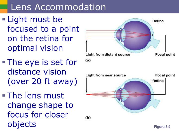 Lens Accommodation