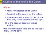 neurons of the retina and vision1