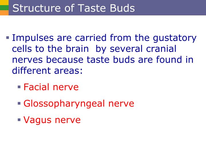 Structure of Taste Buds