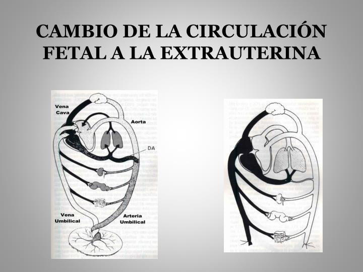 CAMBIO DE LA CIRCULACIÓN