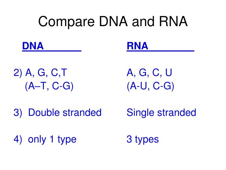Compare DNA and RNA