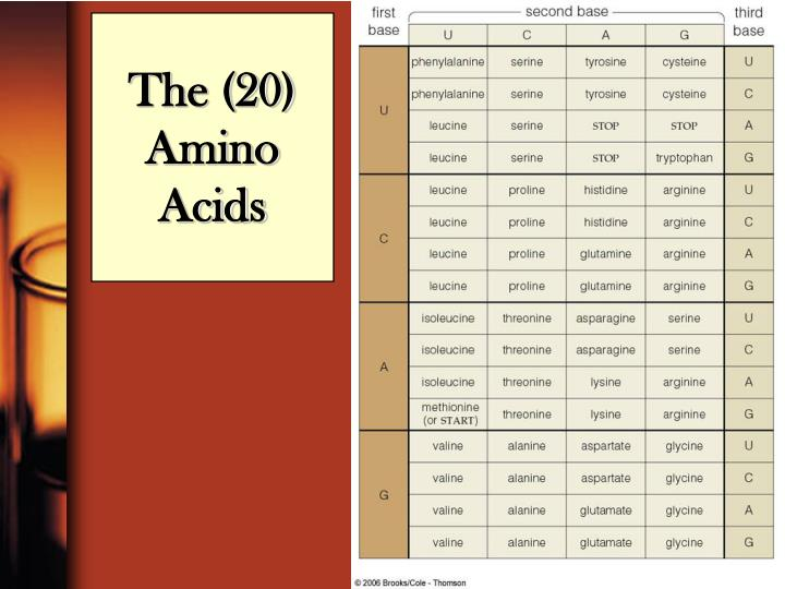 The (20) Amino Acids
