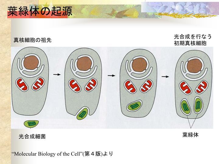 葉緑体の起源
