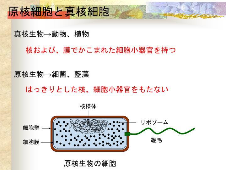 原核細胞と真核細胞