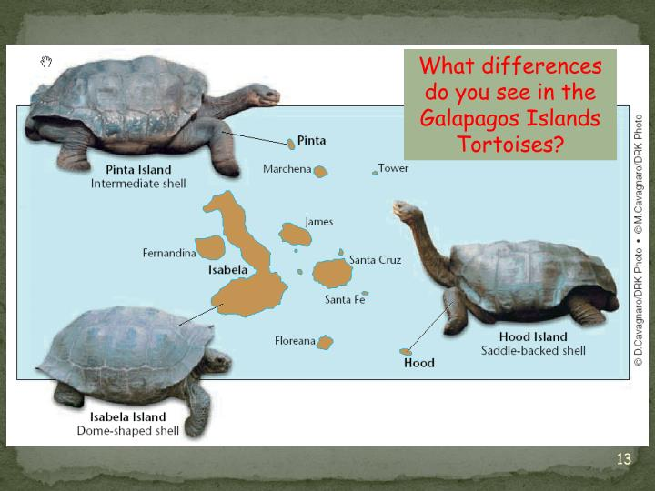 What differences do you see in the Galapagos Islands Tortoises?
