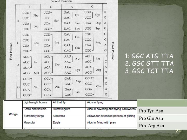 1: GGC ATG TTA