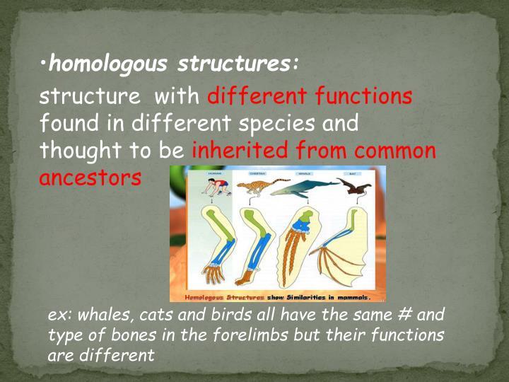 homologous structures: