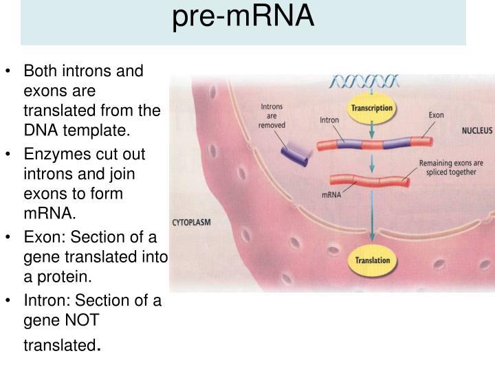 pre-mRNA