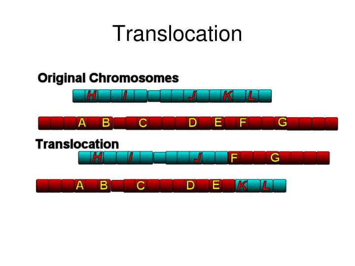 Translocation