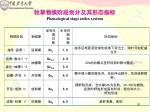 phenological stage index system