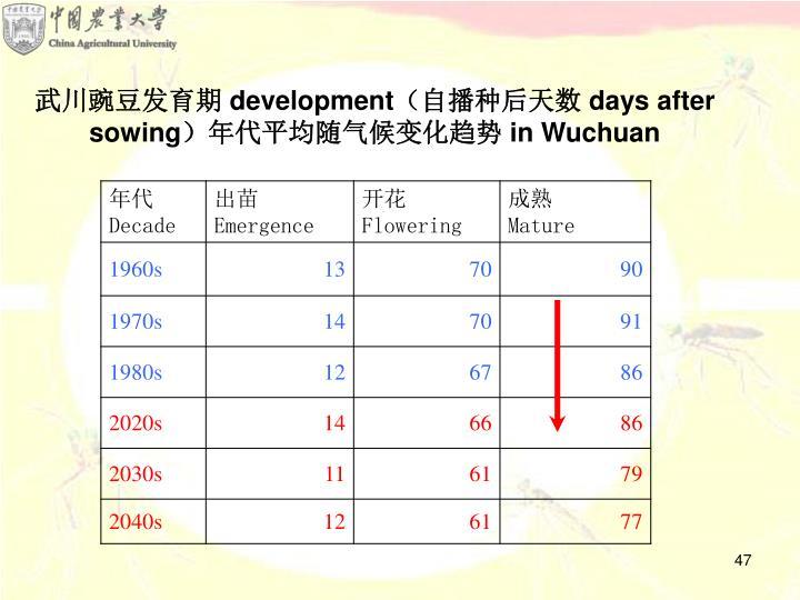 武川豌豆发育期