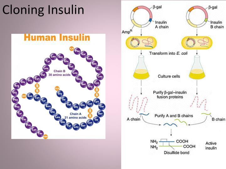 Cloning Insulin