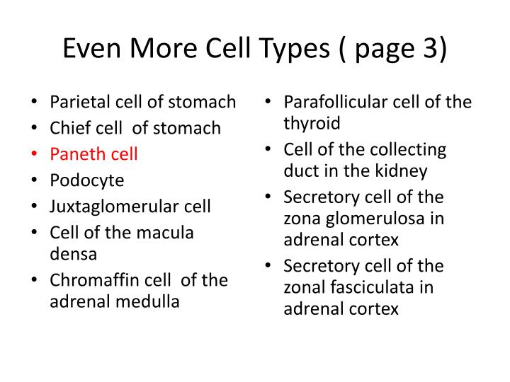 Even More Cell Types ( page 3)
