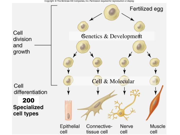 Genetics & Development