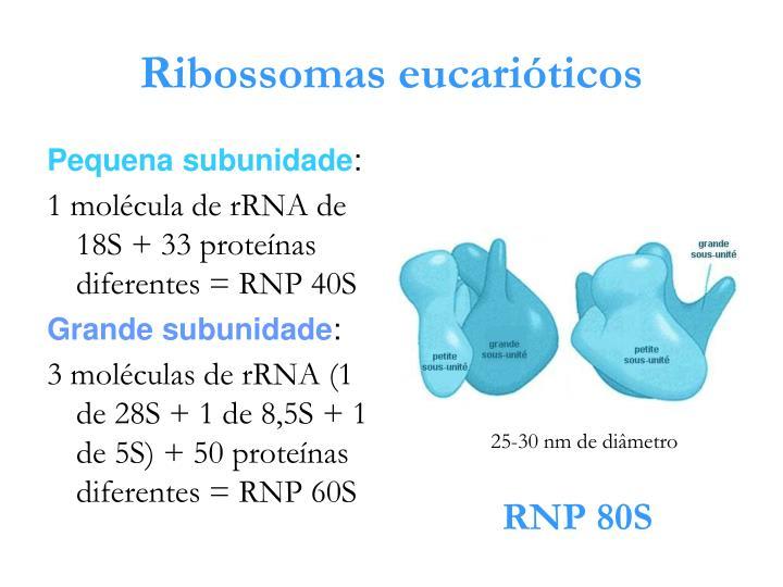 Ribossomas eucarióticos