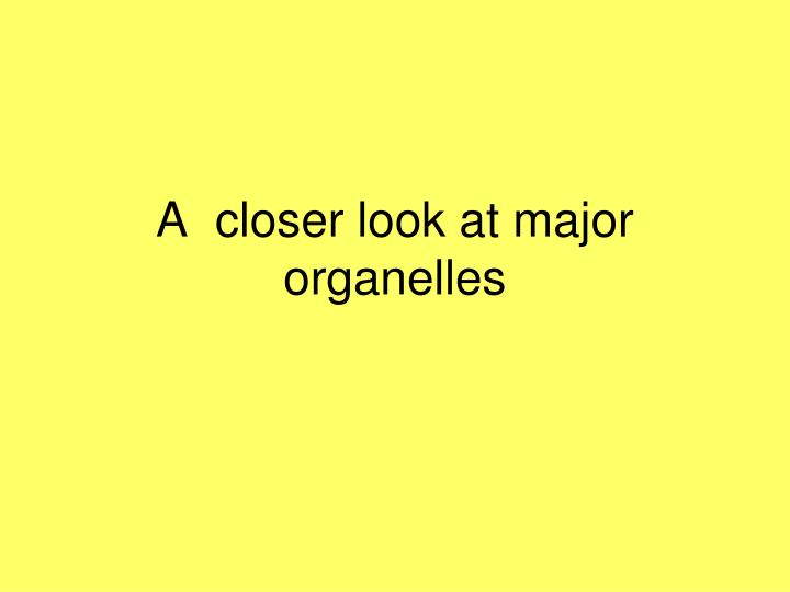A  closer look at major organelles