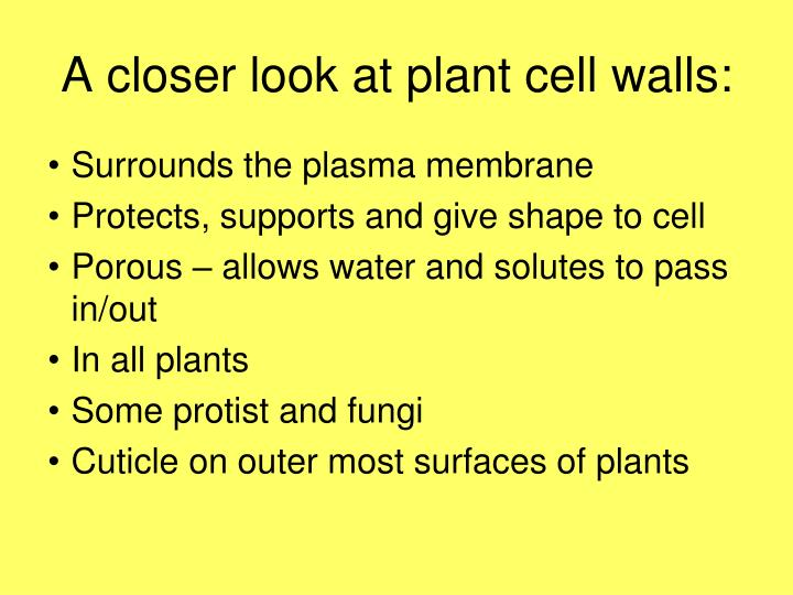 A closer look at plant cell walls: