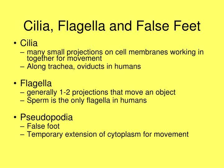 Cilia, Flagella and False Feet