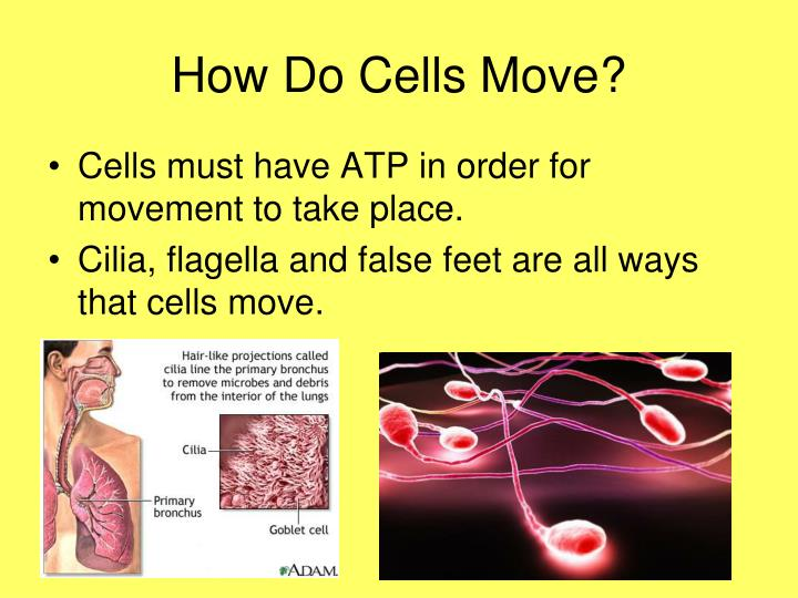 How Do Cells Move?