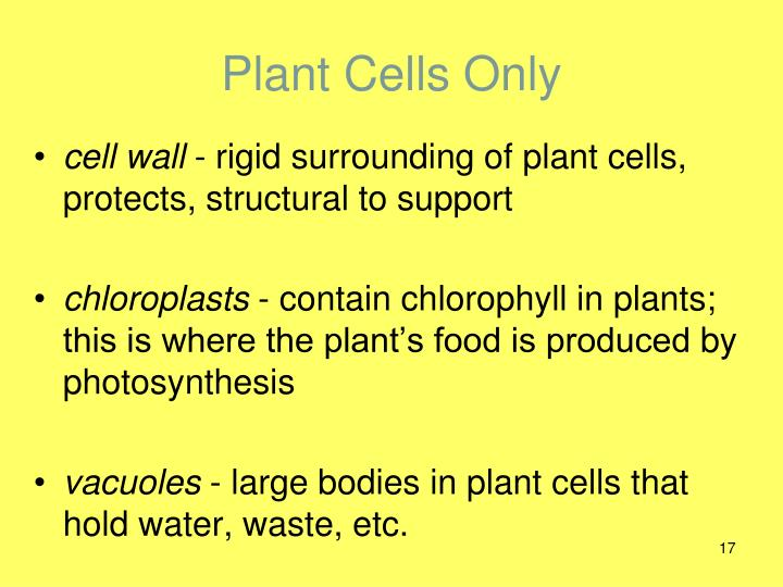 Plant Cells Only