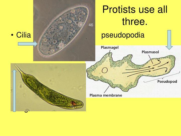 Protists use all three.