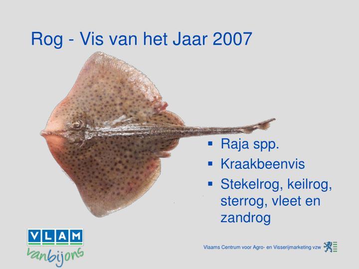 Rog - Vis van het Jaar 2007