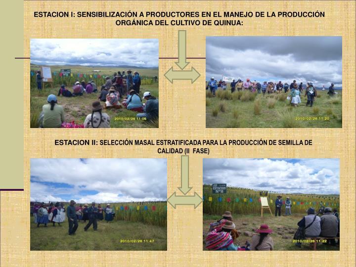 ESTACION I: SENSIBILIZACIÓN A PRODUCTORES EN EL MANEJO DE LA PRODUCCIÓN ORGÁNICA DEL CULTIVO DE QUINUA: