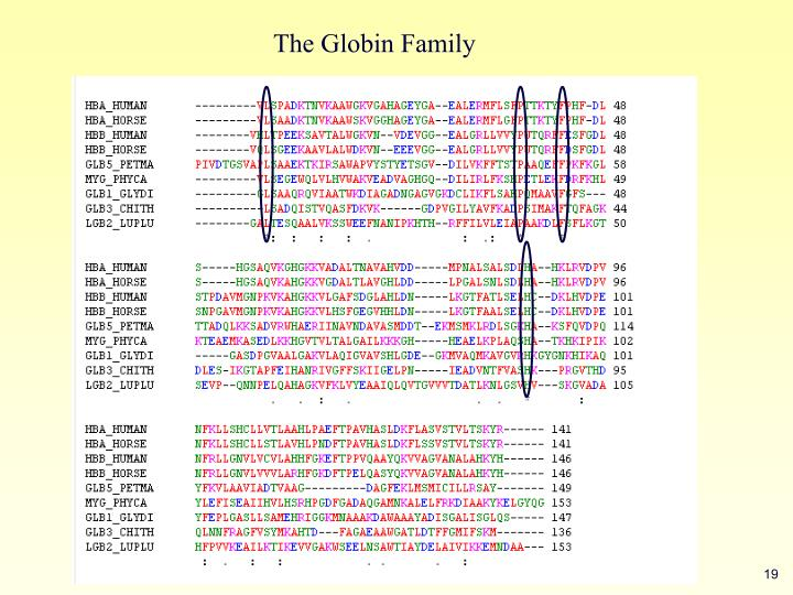 The Globin Family