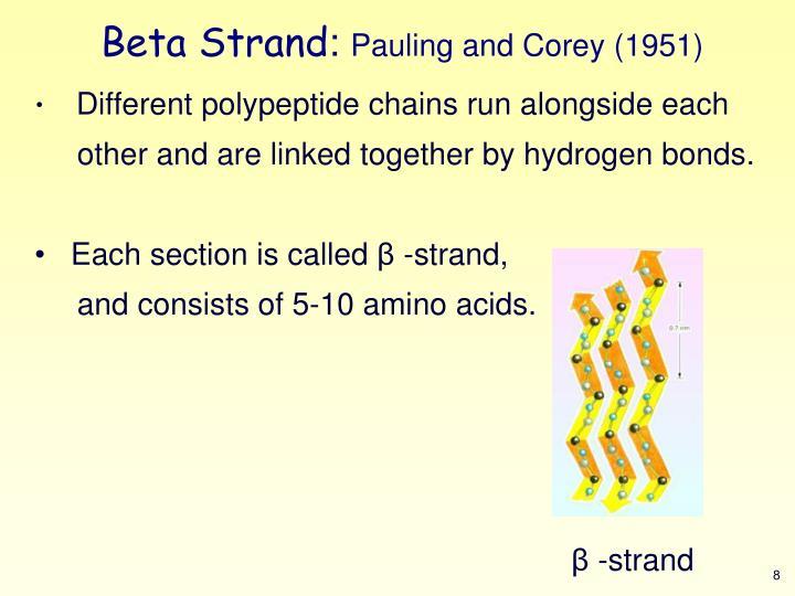 Beta Strand