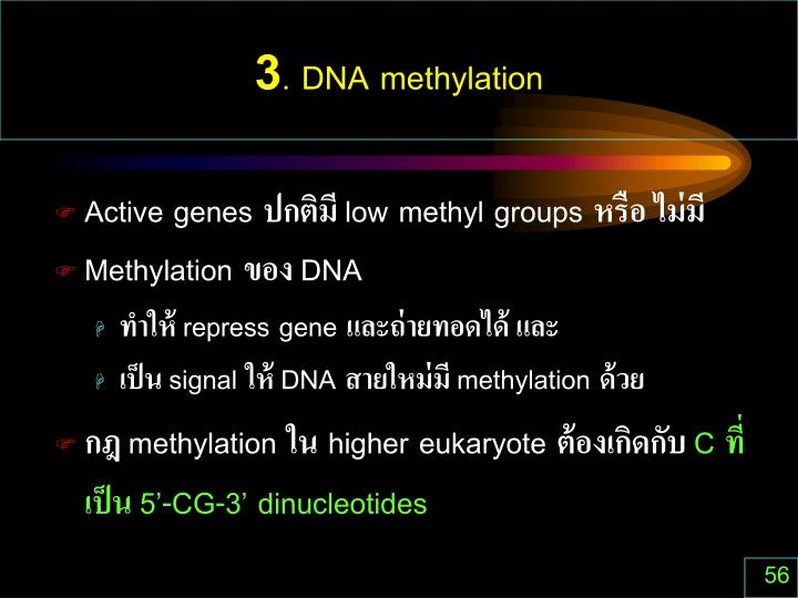 3. DNA methylation
