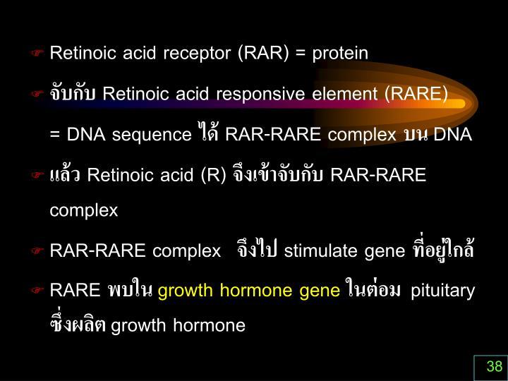 Retinoic acid receptor (RAR) = protein