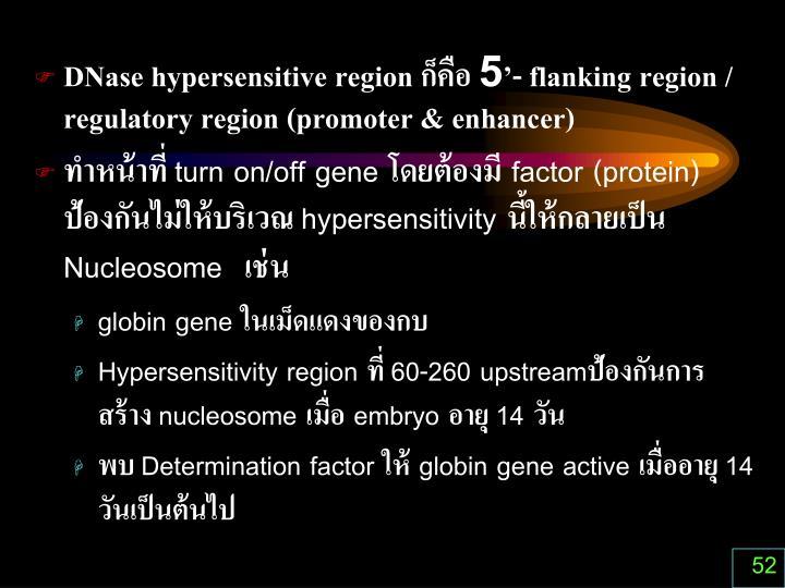 DNase hypersensitive region