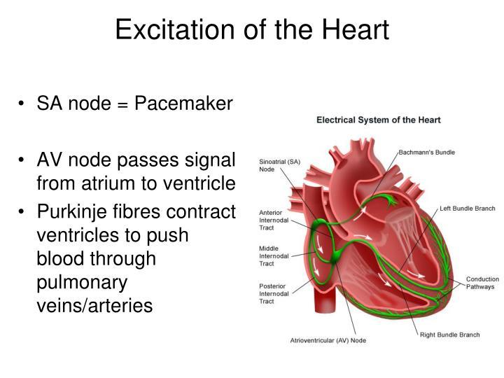 SA node = Pacemaker
