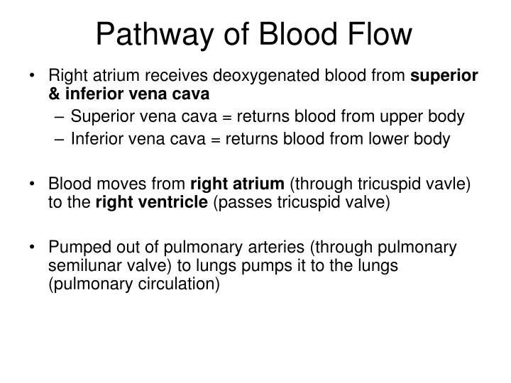 Pathway of Blood Flow