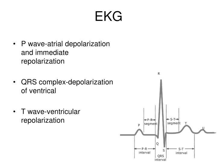 P wave-atrial depolarization and immediate repolarization