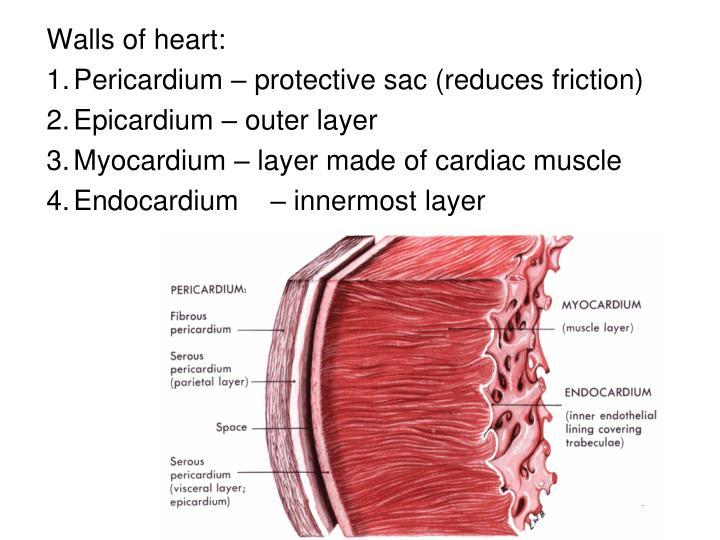 Walls of heart: