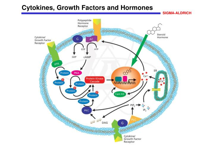 Cytokines, Growth Factors and Hormones