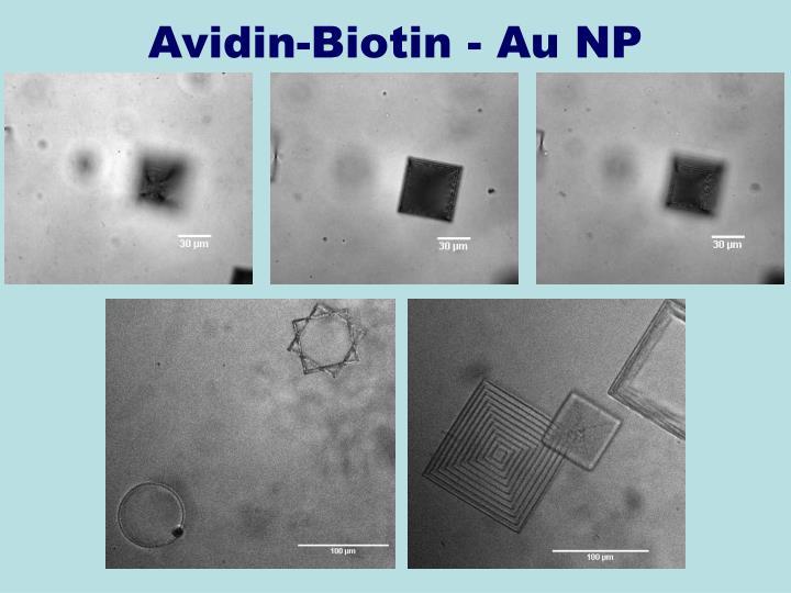 Avidin-Biotin - Au NP