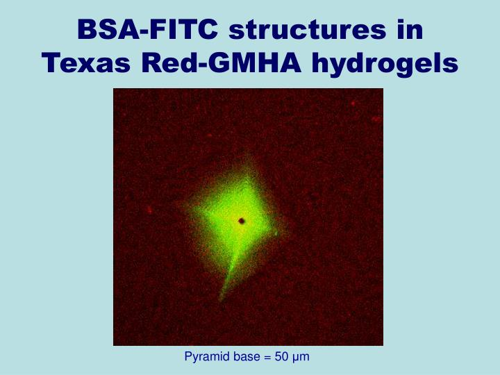 BSA-FITC structures in Texas Red-GMHA hydrogels