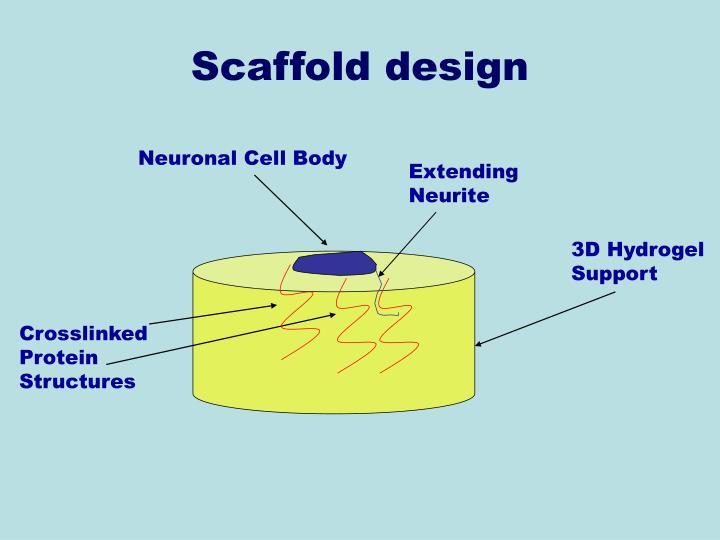 Neuronal Cell Body